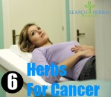 6 Herbs For Cancer