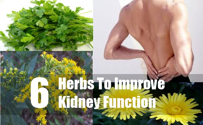 Natural Ways To Increase Kidney Function