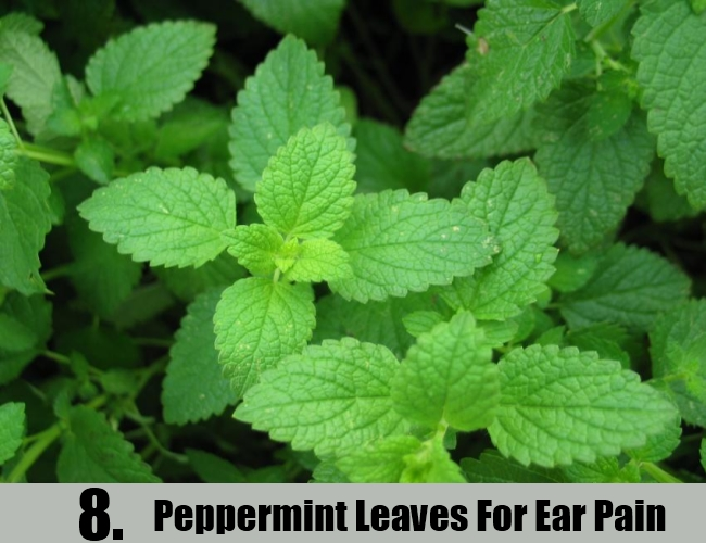 Peppermint Leaves For Ear Pain