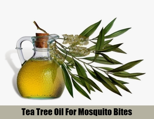 Tea Tree Oil For Mosquito Bites