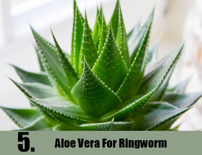 Aloe Vera For Ringworm