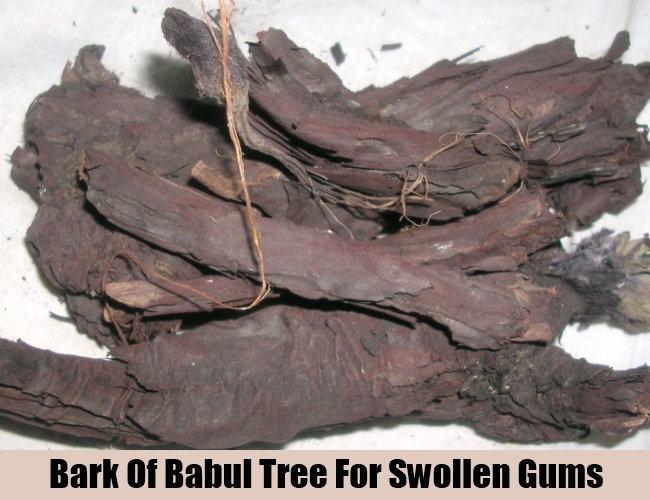 Bark Of Babul Tree For Swollen Gums