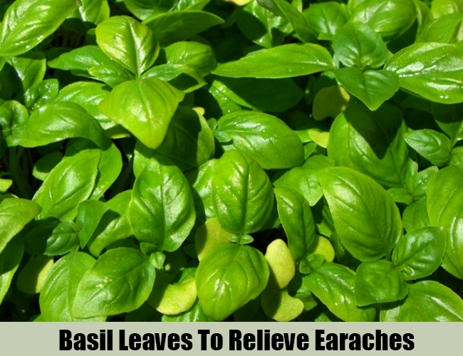 Basil Leaves To Relieve Earaches