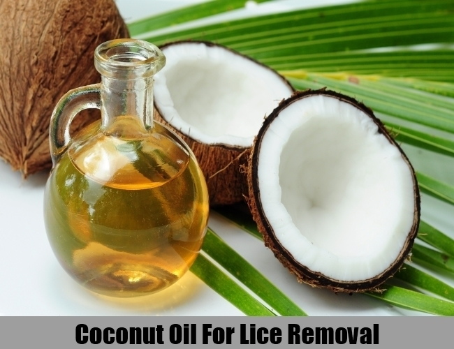 Coconut Oil For Lice Removal