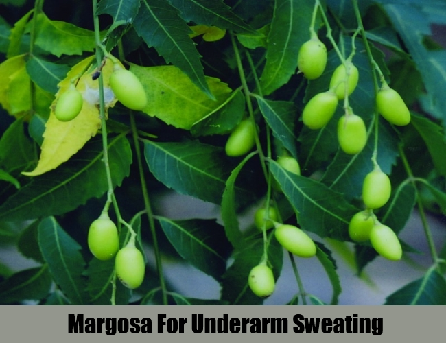 Margosa For Underarm Sweating