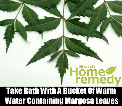 Margosa Leaves