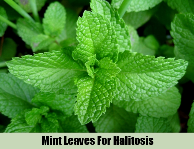 Mint Leaves For Halitosis