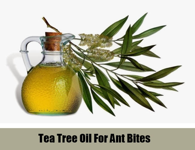 Tea Tree Oil For Ant Bites
