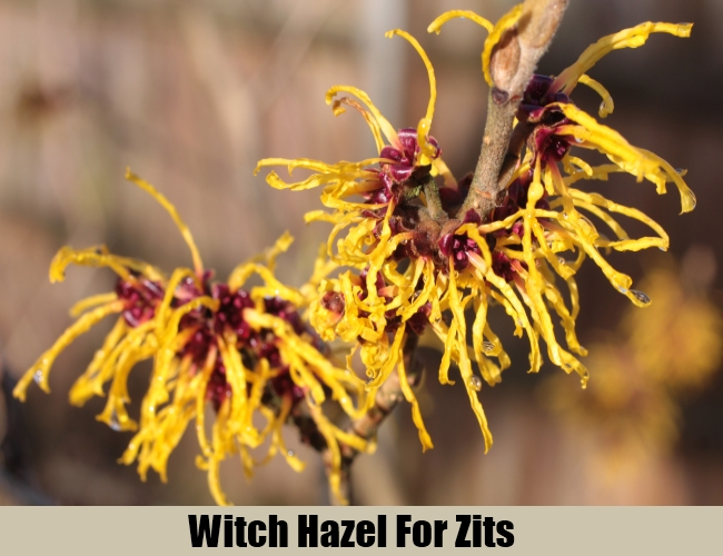 Witch Hazel For Zits