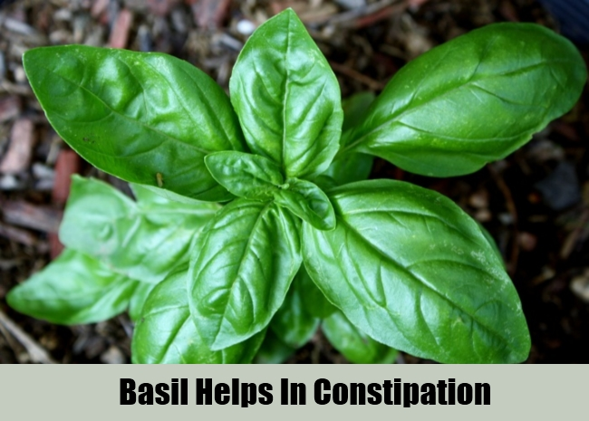 Basil Helps In Constipation