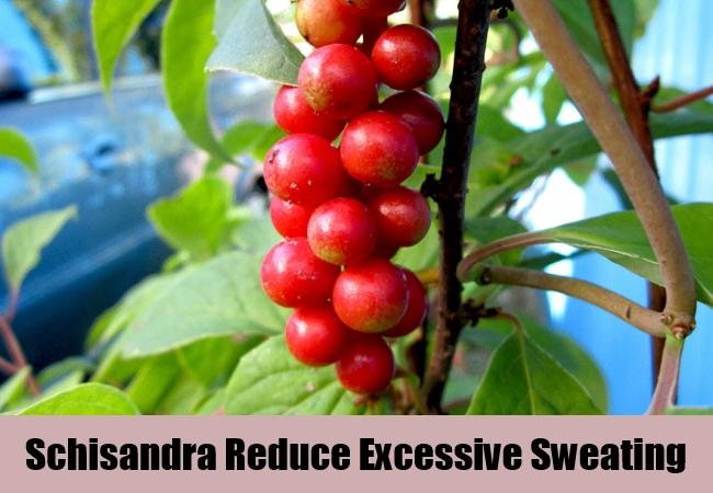 Schisandra Reduce Excessive Sweating