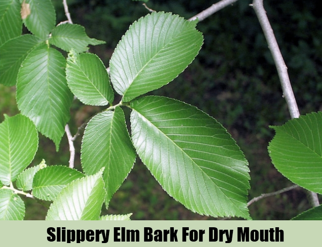 Slippery Elm Bark For Dry Mouth