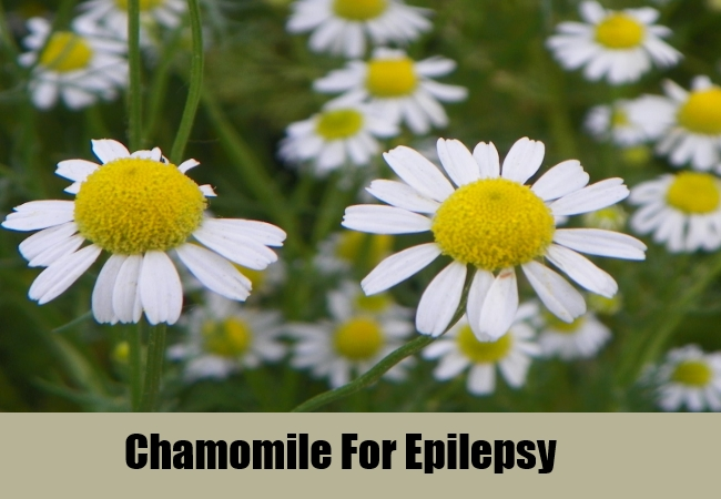 Chamomile For Epilepsy