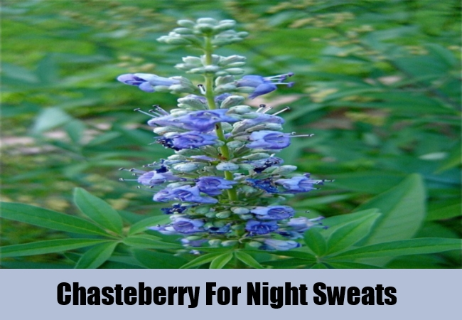 Chasteberry For Night Sweats