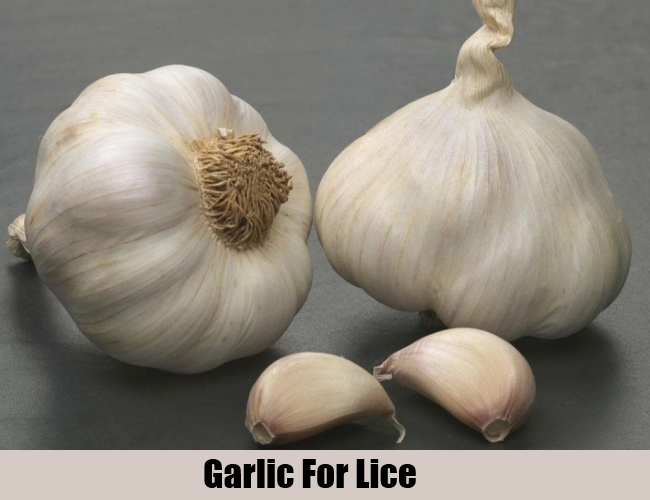 Garlic For Lice