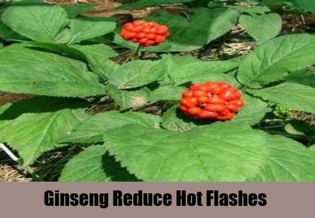 Ginseng Reduce Hot Flashes