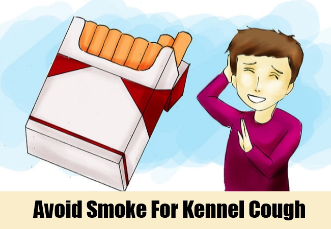 Avoid Smoke For Kennel Cough