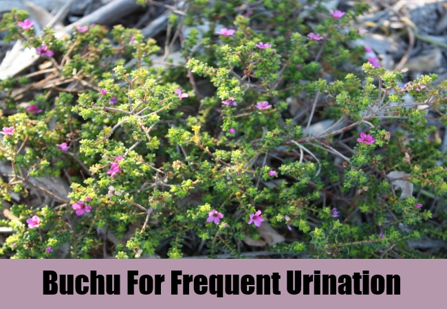 Buchu For Frequent Urination