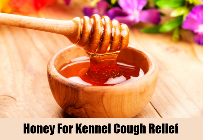 Honey For Kennel Cough Relief