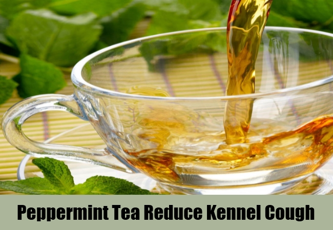 Peppermint Tea Reduce Kennel Cough