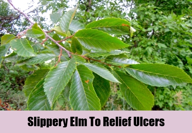 Slippery Elm To Relief Ulcers
