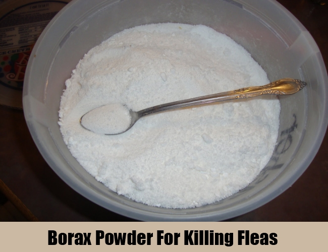 Borax Powder For Killing Fleas