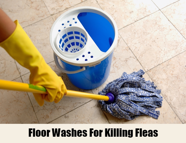 Floor Washes For Killing Fleas