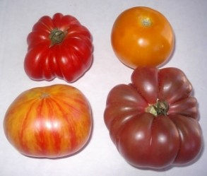 heirloom-tomates-072305