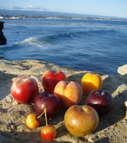 produce overlooking Steamer Lane in Santa Cruz