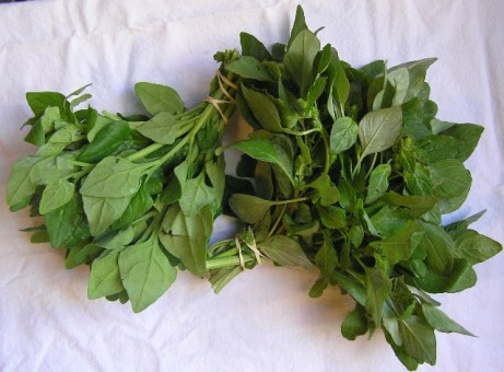 New Zealand spinach and amaranth greens