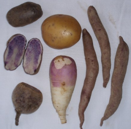 potatoes and turnips
