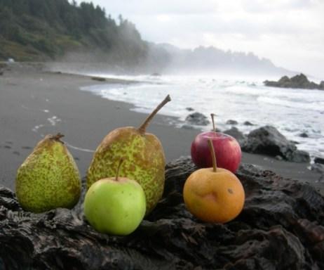 Fortuna market produce on the beach