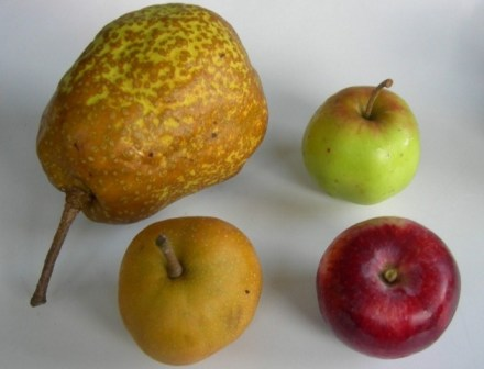 Nellis pears and apples