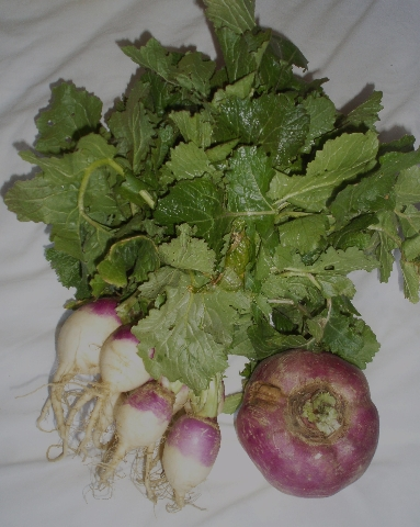 turnips with greens