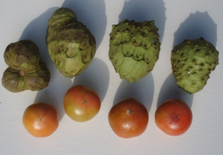 tomatoes and cherimoyas