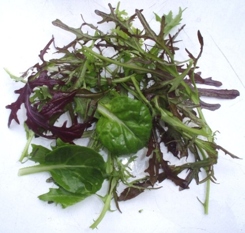 Asian salad mix