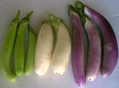 eggplants-072305i