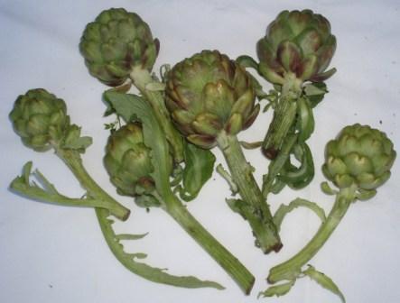 long stemmed artichokes