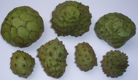 cherimoyas