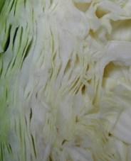 cabbage-032506b