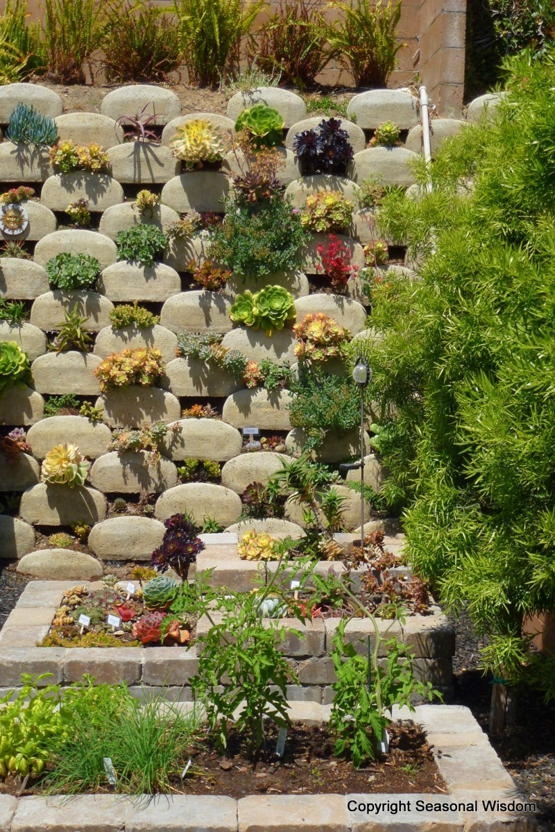 Large Of Vertical Wall Garden Plants