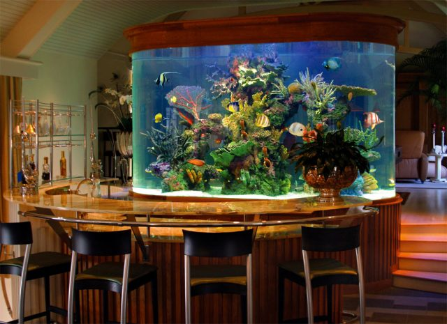 not your everyday aquariums, and we do not build novelty aquariums