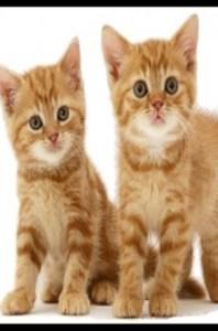 weblog tienda animales