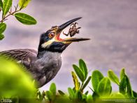 As melhores fotos do Concurso de fotografia da National Geographic