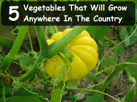 5 Vegetables That Will Grow Anywhere In The Country