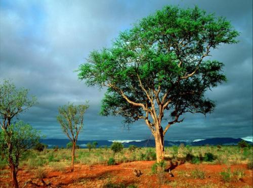 radura-africa-sfondo-1024x768