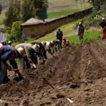 El modelo capitalista en la agricultura colombiana
