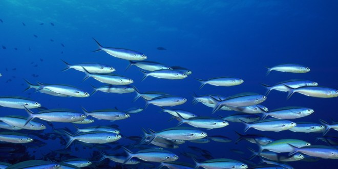 wallpapers-fishes-one-response-to-underwater-hd-1600x1200