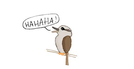 Le kookabura