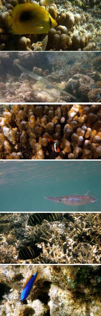 Snorkeling à Nouméa